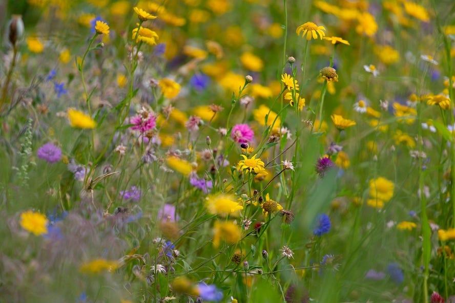 tuinkalender april wilde bloemen mix