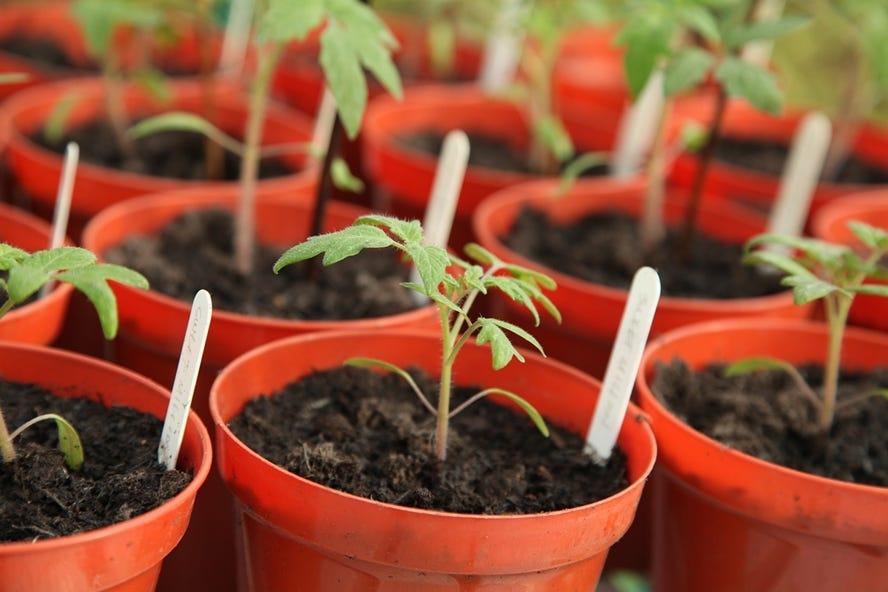 stiga calendrier de jardinage avril  semer des fruits legumes et herbes dans la serre