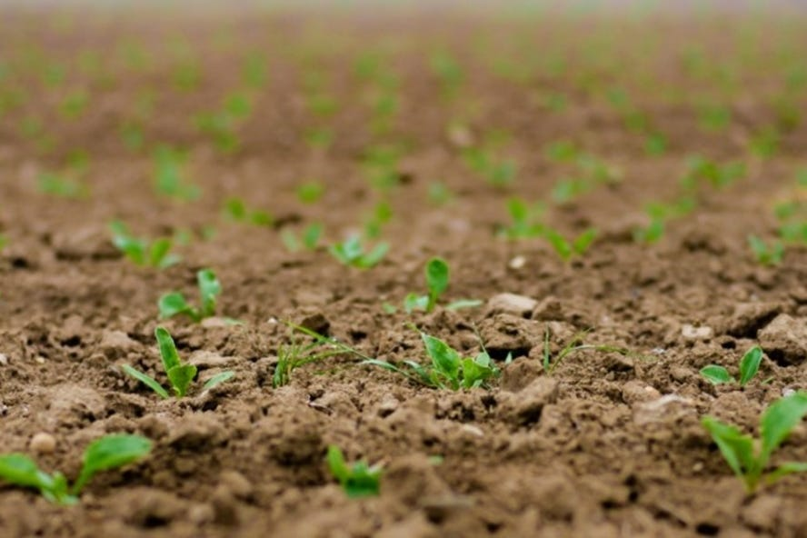 stiga calendrier de jardinage avril quelles herbes fruits et legumes a planter dans le potager dehors