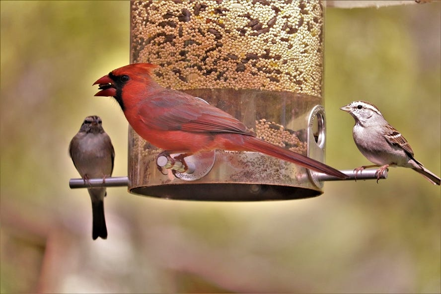 stiga tuinkalender april vogels voederhuisje in de tuin