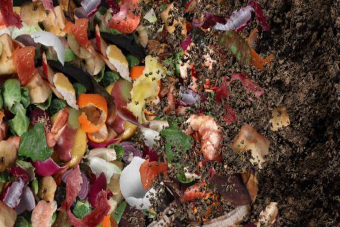 compost made of a mix of rotten fruit and vegetables