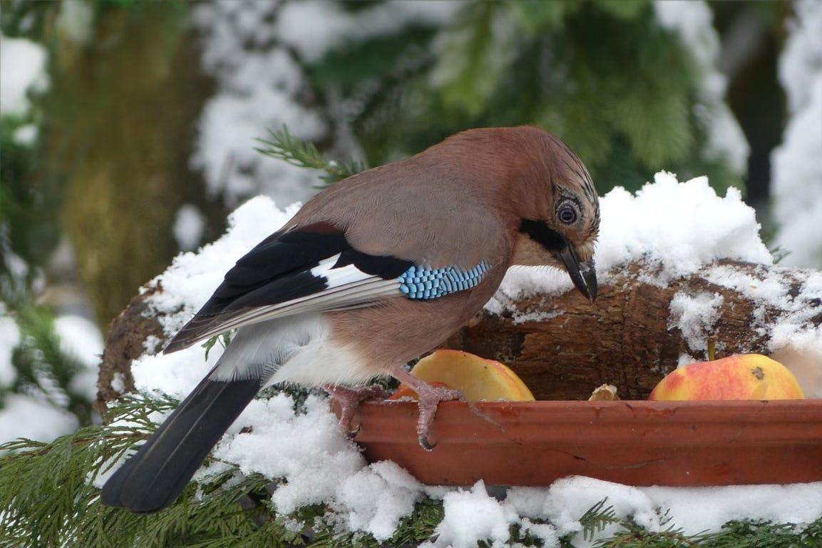 vogel voederhuisje vogelhuisje winter sneeuw tuin