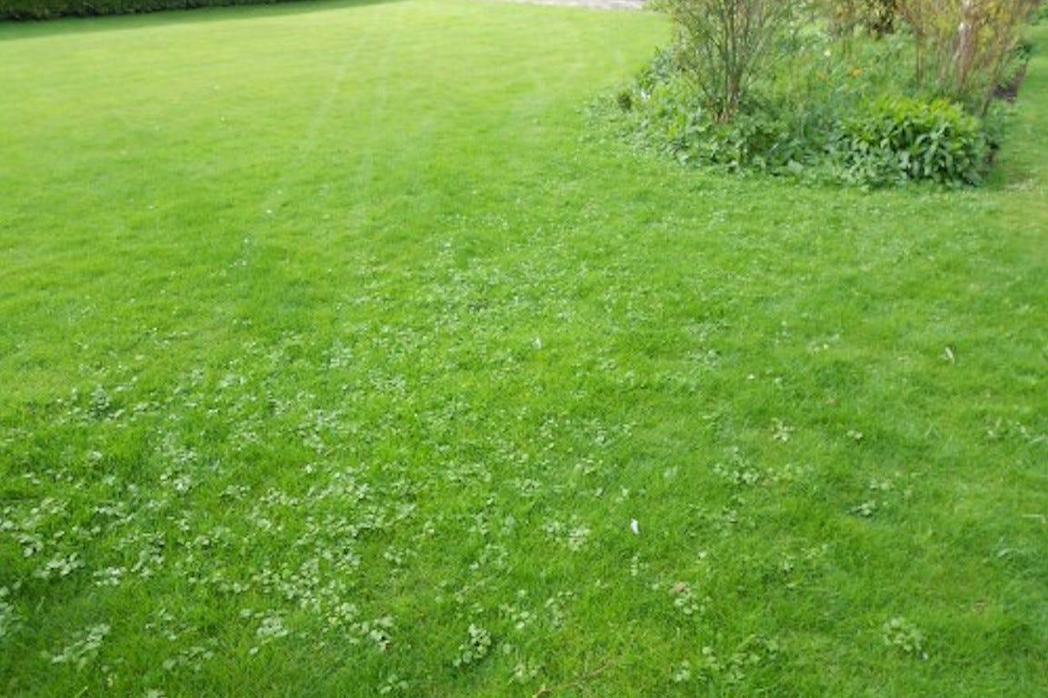 weeds-lawn-weeds