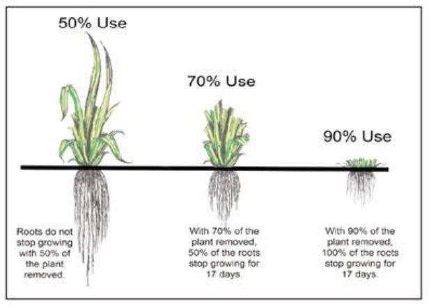croissance des racines des plantes d'herbe lors de la tonte de la pelouse stiga magazine
